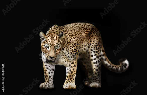 Foto auf Gartenposter Leopard leopard isolated on black