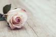 canvas print picture - Vintage Rose
