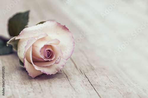 Foto op Canvas Roses Vintage Rose