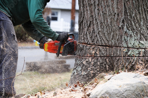 Fotografie, Obraz  working man cutting tree trunk with chainsaw in residential area