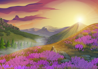 Lavender, summer evening landscape, vector background
