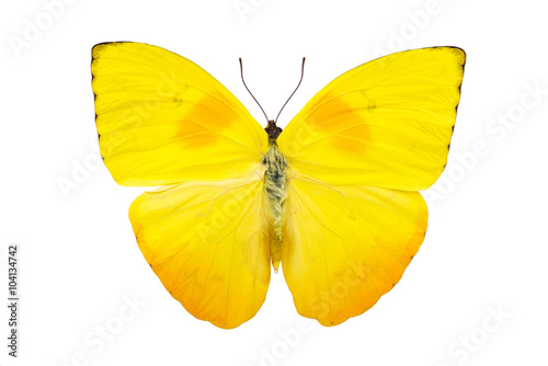 Tuinposter Vlinder Beautiful bright yellow butterfly isolated on white