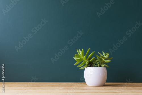 In de dag Planten Indoor plant on wooden table and wooden wall