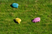 RGB-Schafe Von Oben, Westerhev...