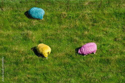 RGB-Schafe von oben, Westerhever, Schleswig-Holstein, Deutschland