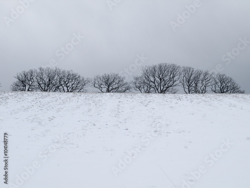 Fotografie, Obraz  雪原と森
