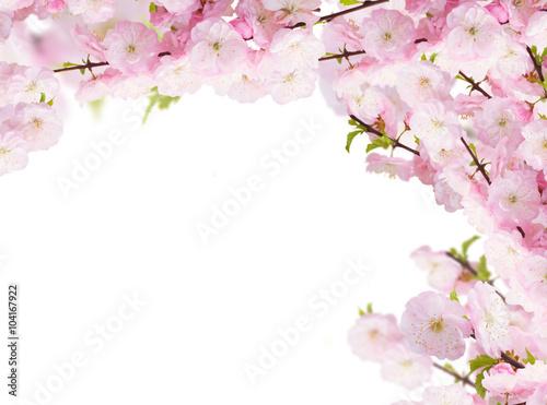 kwitnaca-biale-drzewo-kwiaty