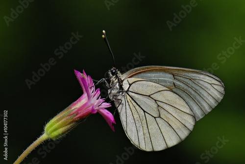 Recess Fitting Butterfly Beyaz Alıç Karanlığın İçinde