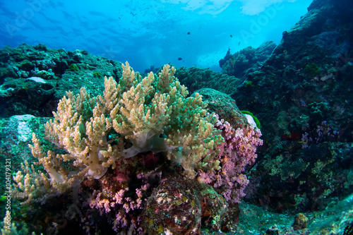 Fotobehang Onder water Beautiful reefscape of Similan islands.Thailand.