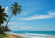 Beautiful ocean coast with tropic palms