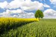 Kolorowe pole wiosną i zielone drzewko na tle błękitnego nieba
