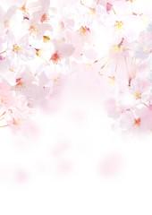 Fototapeta Optyczne powiększenie 桜 写真 縦 白