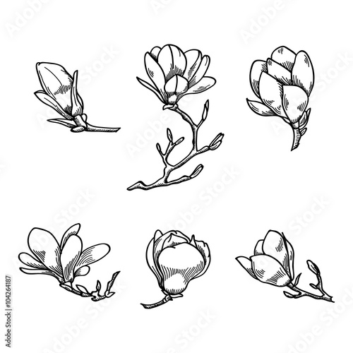 Spring Magnolia Flower Black And White Hand Drawn Vector Sketch