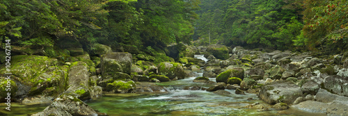 Rainforest river in Yakusugi Land on Yakushima Island, Japan