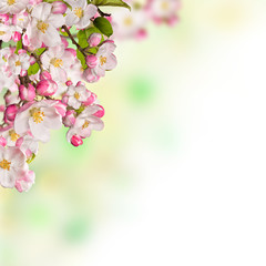 NaklejkaCherry blossoms over blurred nature background