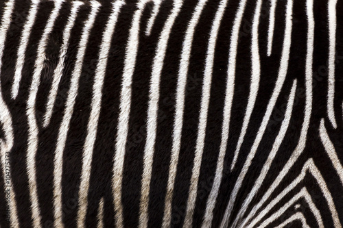 Aluminium Prints Zebra Zebra stripes