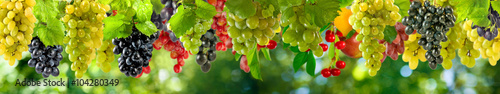 plakat ripe grapes on a green background in the garden