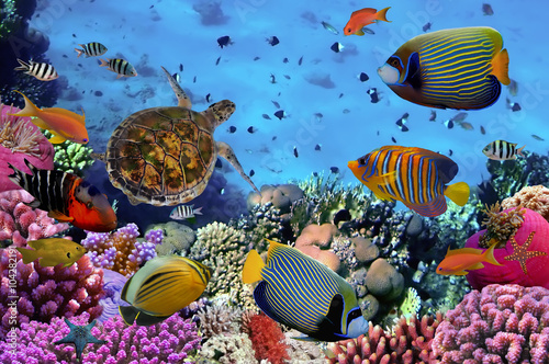 colorful coral reef with many fishes - 104282191