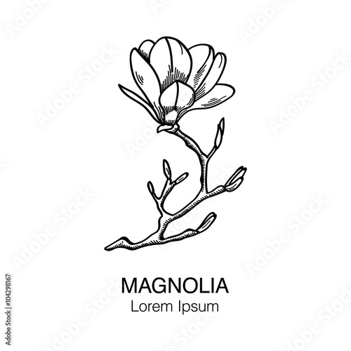 Magnolia Flower Black And White Hand Drawn Vector Sketch Vol5 Buy