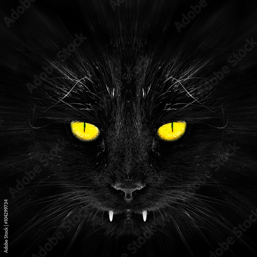 Photo  Black cat in dark close-up