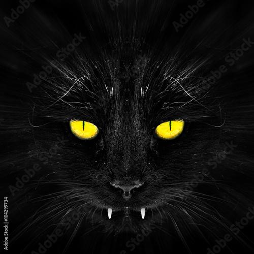 Photo  Black cat in dark close-up