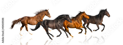 Foto op Canvas Paarden isolate of four galloping horse on the white background
