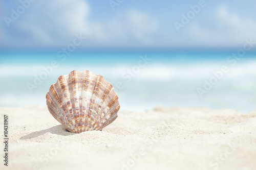 Fotografie, Obraz  Scallop Shell in the Sand Beach of the Caribbean Sea