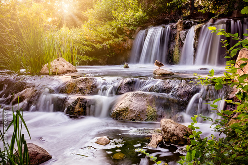Foto op Canvas Watervallen Waterfall at sunset with Mallard duck