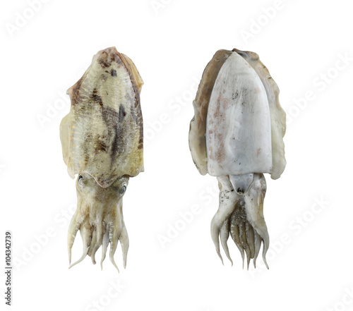 Fotomural Fresh cuttlefish (Sepia) isolated on white background.