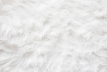 De-focused Sheep Wool Fur Background Texture Wallpaper.