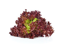 Red Coral Salad Isolated On Th...