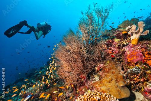 pletwonurek-zbadac-rafe-koralowa