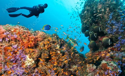 plakat Scuba diver explore a coral reef