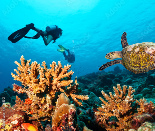 Obraz na plátně  Scuba divers explore a coral reef