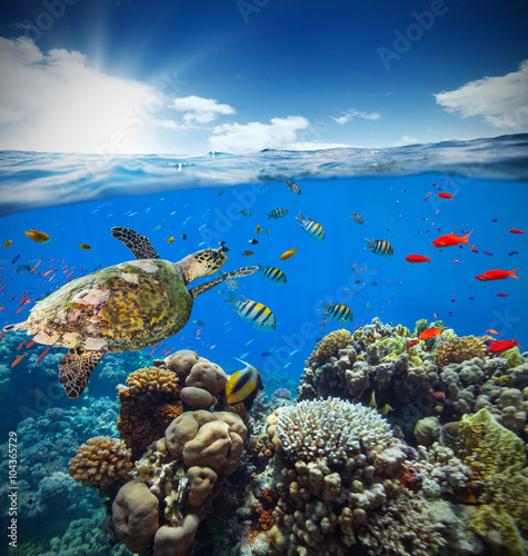 Canvas Prints Under water Underwater coral reef with horizon and water surface