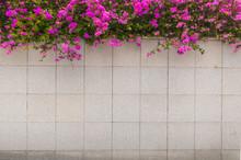 Pink Bougainvillea Flower On T...