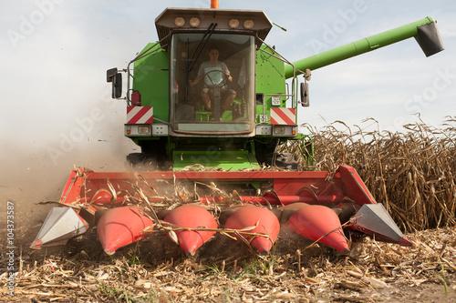 Stampe  Corn harvesting time