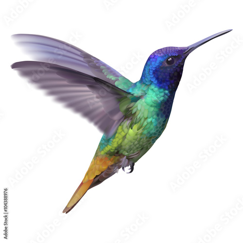 Hummingbird - Golden tailed sapphire. Hand drawn vector illustration of a flying Golden tailed sapphire hummingbird with colorful glossy plumage on transparent background.