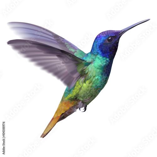 Photo  Hummingbird - Golden tailed sapphire