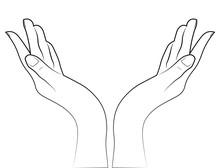 Sketch Of The Hands