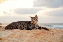 Cat Lay On The Beach