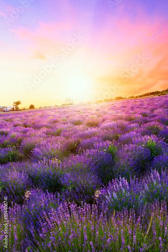 Fototapeta Sunset over a summer lavender field in Tihany obraz na płótnie