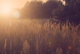 vintage natura zachód wschód słońca retro