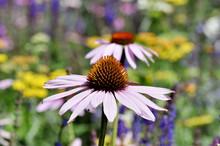Colorful Beefriendly Garden