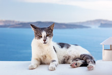 Cat Lying On Stone Wall In Oia...