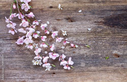 galazki-z-kwiatami-wisni