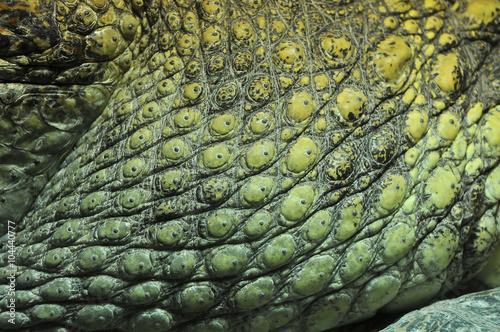 Crocodile skin Wallpaper Mural
