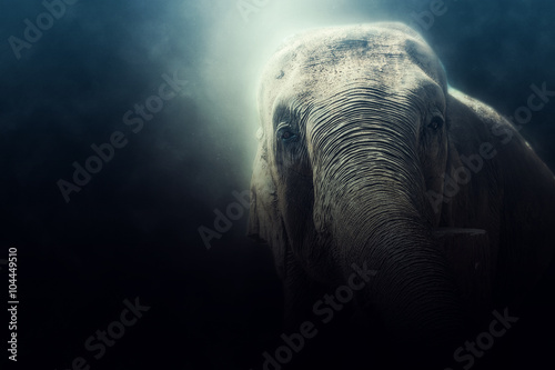 photo manipulation of a wild elephant in Sri Lanka Poster