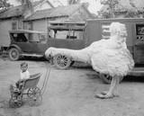Fałszywy chłopiec pchający strusia w wózku - 104454542