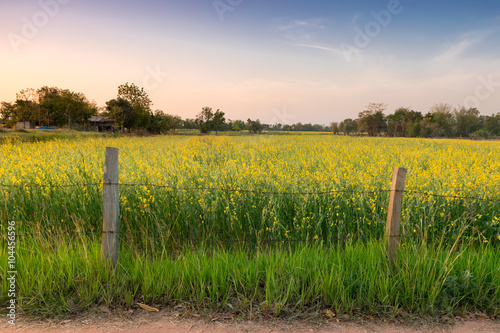 Foto auf Gartenposter Landschappen yellow flower field sun set